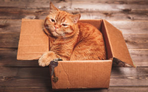 A Guide to Transporting Your Cat