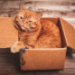 Guide to Transporting Your Cat