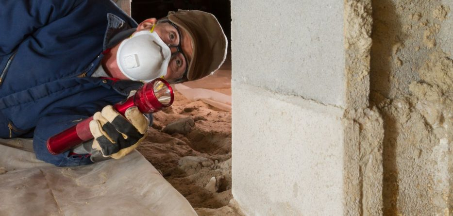 Termites on Your Property Follow These Steps to Eliminate The Infestation